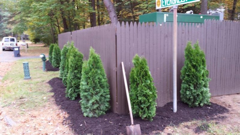 Photo of Sewer Easement with bushes and fence